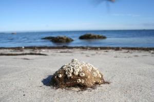 sea_coral